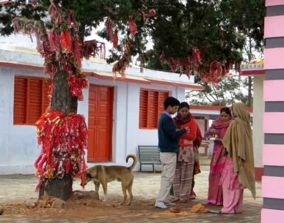 Rencontre autour de la préparation de coco en offrande à l'arbre de vie,KunjaPuri,Uttarakhand,Inde